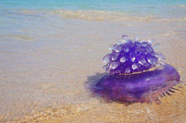 puntura medusa bambini