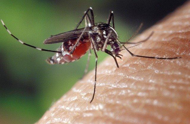 come si trasmette il virus Zika al feto