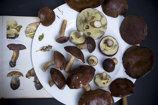 funghi in gravidanza